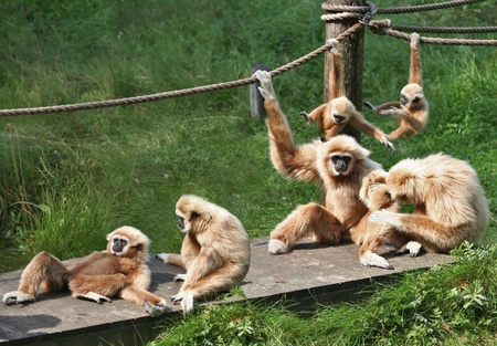 playful behaviour: A bid family of monkeys playing around and enjoining themselves.
