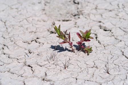 against all odds: Small plant emerging in dry mud desert. Symbol for life against all odds. Stock Photo