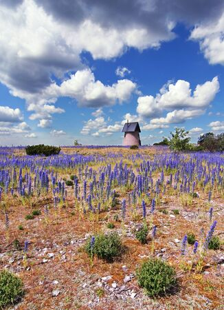 Countryside landscape with purple flowers and an old wind mill. Stock Photo
