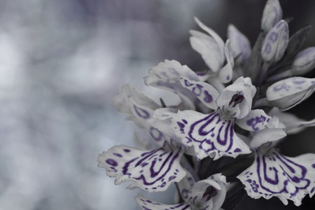 Dark abstract of flower that looks like an angel. Stock Photo