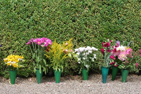 A row of pot flowers in front of green hedge. Stock Photo