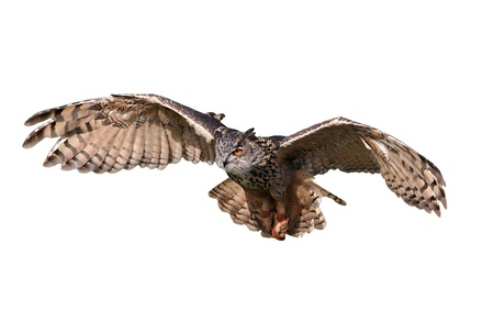 Flying owl cut out and isolated on white.