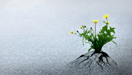 Plant emerging through asphalt against all odds. Symbol for natural forces and fantastic achievements. Copy space. Stock Photo