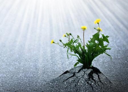 인내: 식물은 삶과 성공의 밝은 희망하지만 아스팔트, 기호 등장.