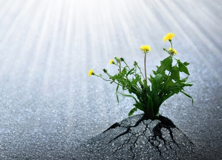 patience: Plants emerge though asphalt, symbol for bright hope of life and success.