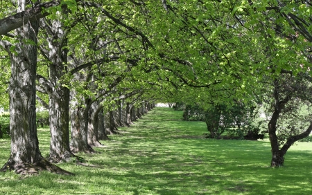 Lush green garden alley with shimmering light and space for your text