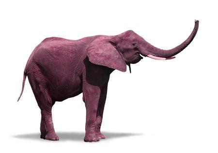 ピンクの象を白で隔離されます。