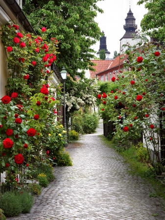 Wonderful alley of roses in the medieval town of visby