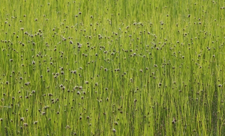 Organic background texture of bright green grass