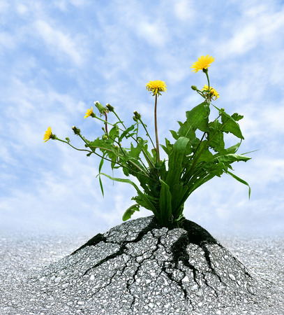 Symbol for many things in life  Persistence, determination, survival, hope, resilience, strength, winning, force of nature  photo