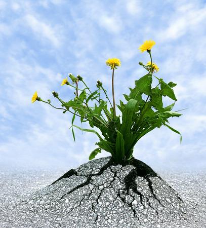 Symbool voor vele dingen in het leven Persistence, vastberadenheid, overleving, hoop, veerkracht, sterkte, het winnen, kracht van de natuur Stockfoto