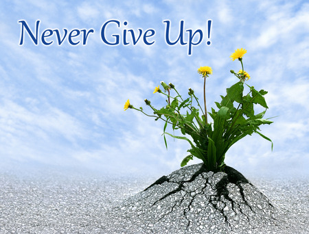 Never give up, inspiring conceptual image with added quote. photo