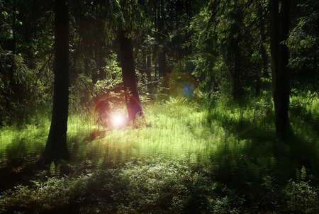 Deep forest with lush green plants enlighten by mysterious light and flares.