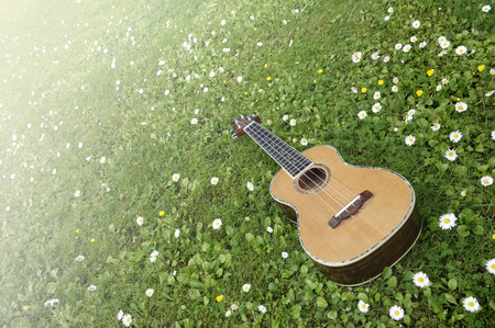 Ukulele Dream. Bright and sunny concept in springtime with an isolated ukulele on green grass and flowers
