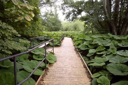 Houten Gang in gelukzalige natuur met een prachtig landschap en wilde planten. Ook symbool voor de toegankelijkheid en aanpassingen, zodat iedereen kan genieten van de natuur.