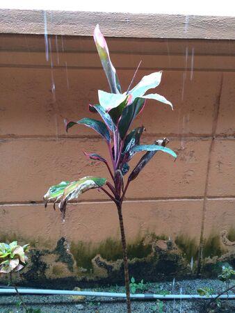 Close-up van de plant met regendruppels