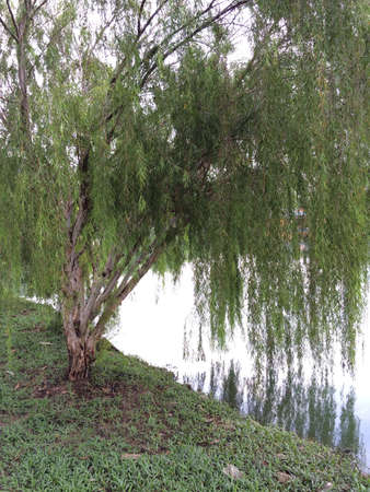 반사와 물 옆에 나무