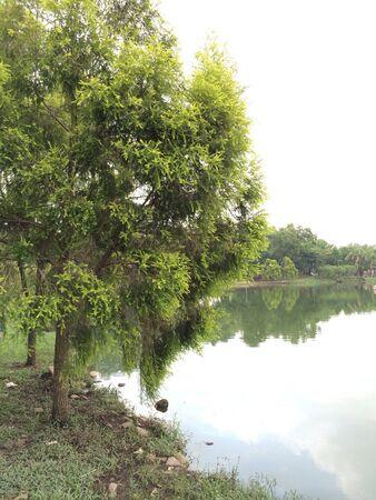 호수 옆의 나무 스톡 콘텐츠