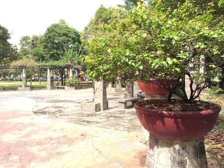 Potted trees near playground at park