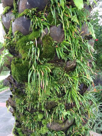 Tree trunk with lots of plants growing on it Banco de Imagens