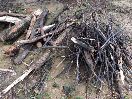 Pile of various size firewood Banco de Imagens