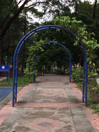 Park walkway with plants and trees