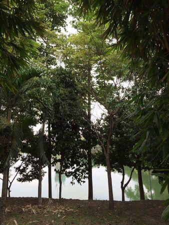 Tree scenery with lake Banco de Imagens