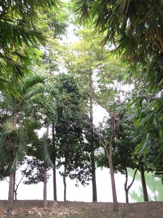 Trees scenery with bright lighting Banco de Imagens