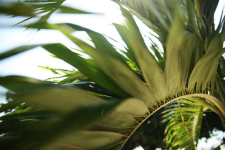become: Image Soft focus Green palm leaves natural background or texture