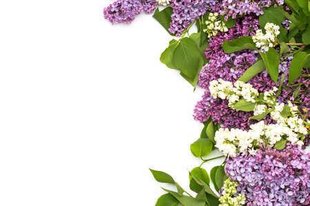 Die schöne Flieder auf weißem Hintergrund. Platz zum Einfügen von Text. Frühlingshintergrund. Flach, Ansicht von oben. Standard-Bild