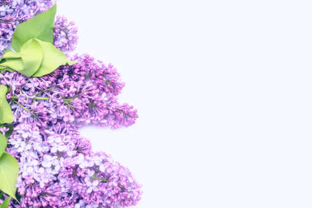 The beautiful lilac on white background. Place to insert text. Spring background. Flat, top view.