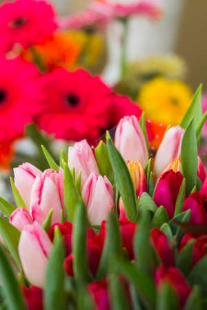 Beautiful tulips in the garden. Bright red flowers. Spring and summer background. Archivio Fotografico - 115563216