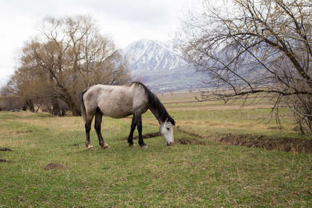 Horses graze in a meadow in the mountains. Grazing livestock. Natural background Stok Fotoğraf
