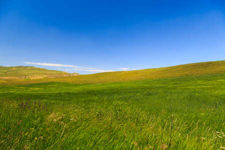Beautiful spring and summer landscape. Lush green hills, high snowy mountains. Spring blooming herbs.