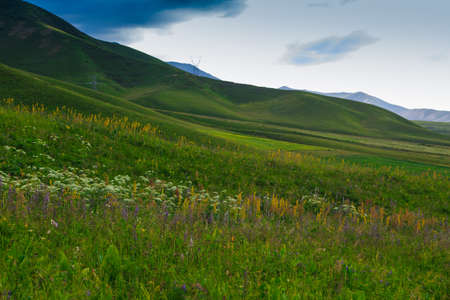Flowering wild grass in the mountains. Summer landscape. Kyrgyzstan. Natural background Banque d'images