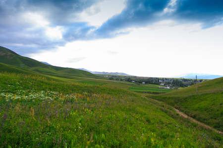 Flowering wild grass in the mountains. Summer landscape. Kyrgyzstan. Natural background 版權商用圖片