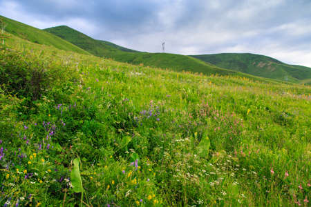 Beautiful spring and summer landscape. Lush green hills, high snowy mountains. Spring blooming herbs. Banque d'images - 150369022