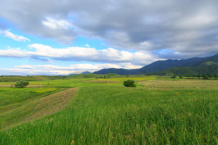 Beautiful spring and summer landscape. Lush green hills, high snowy mountains. Spring blooming herbs. Banque d'images - 150369136