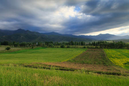 Beautiful spring and summer landscape. Lush green hills, high snowy mountains. Spring blooming herbs. Banque d'images - 150369140