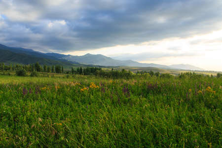 Beautiful spring and summer landscape. Lush green hills, high snowy mountains. Spring blooming herbs. Banque d'images - 150470851