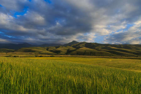 Beautiful spring and summer landscape. Lush green hills, high snowy mountains. Spring blooming herbs. Banque d'images - 150470857