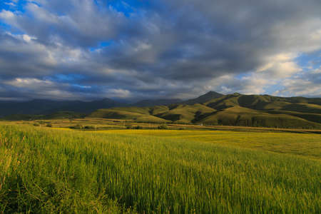 Beautiful spring and summer landscape. Lush green hills, high snowy mountains. Spring blooming herbs. Banque d'images - 150452569