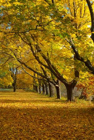 seacoast: Fall foliage on the New England seacoast.