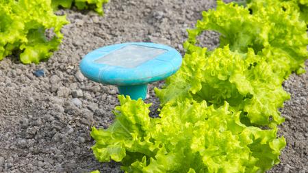 Closeup von grünen Salat Pflanzen auf dem Bauernhof Standard-Bild - 80989108