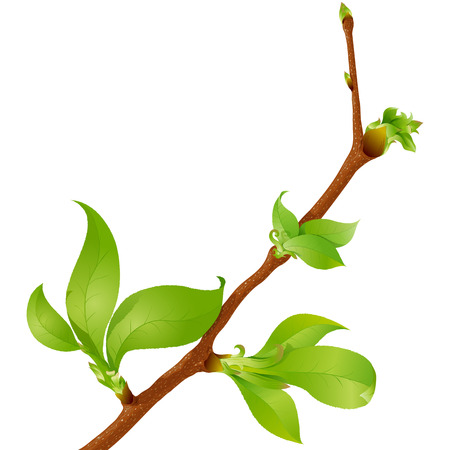 Highly detailed spring branch with leaves and buds Ilustração