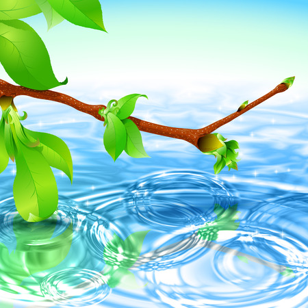 circular water ripple: Concentric circular waves ripple on the water and Branch with leaves and buds