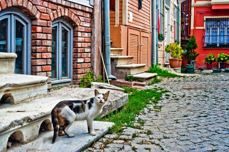 abandoned cat in the street. Istanbul. Turkey