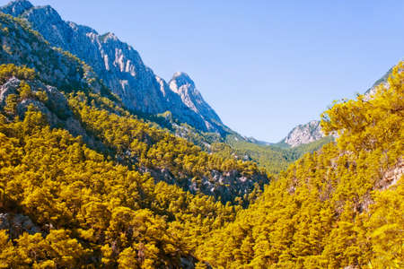 Pine forest on the slopes of the Taurus Mountains  Turkey Stock Photo