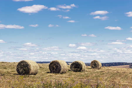 sloppy: Sloppy haystacks drying on the summer field Stock Photo