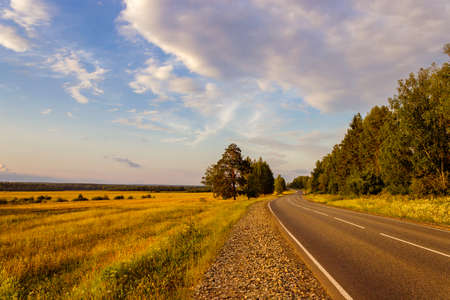 Asphalt road passing by the forest in the evening